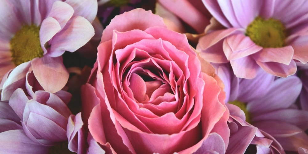 flowers-love-roses-pink-rose